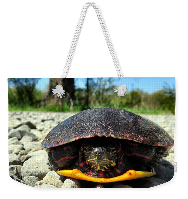 Turtle Weekender Tote Bag featuring the photograph And So I Wait by Art Dingo