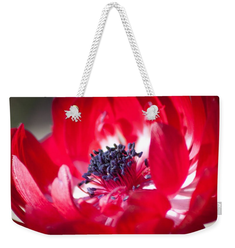 Anemone Coronaria Weekender Tote Bag featuring the photograph Anemone Coronaria by Lynne Jenkins