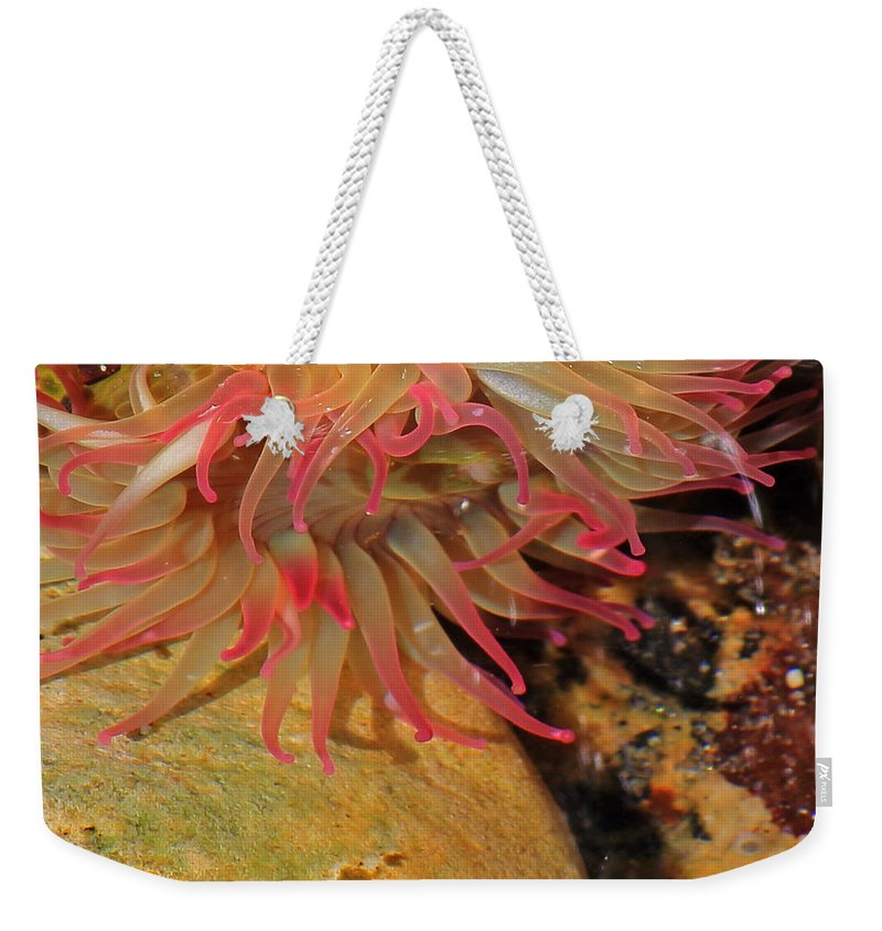 Sea Anemone Weekender Tote Bag featuring the photograph Anemone by Randy Hall