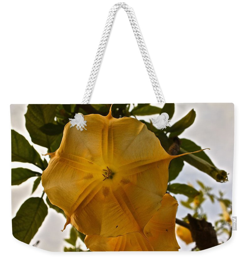Angel's Trumpets Weekender Tote Bag featuring the photograph Angel's Trumpets by Carol Tsiatsios