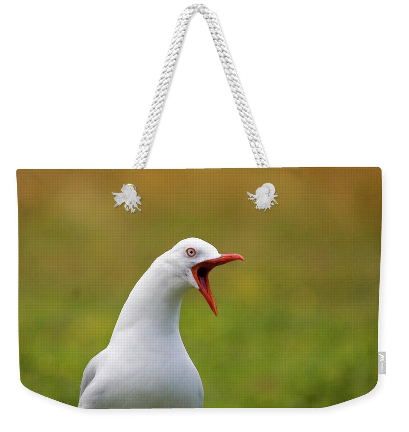 Larus Scopulinus Weekender Tote Bag featuring the photograph Angry Red Billed Gull by Dave Walsh