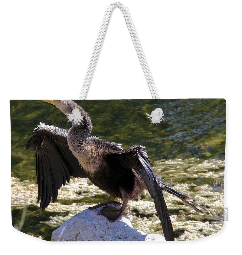Anhinga Weekender Tote Bag featuring the photograph Anhinga Female by Doris Potter