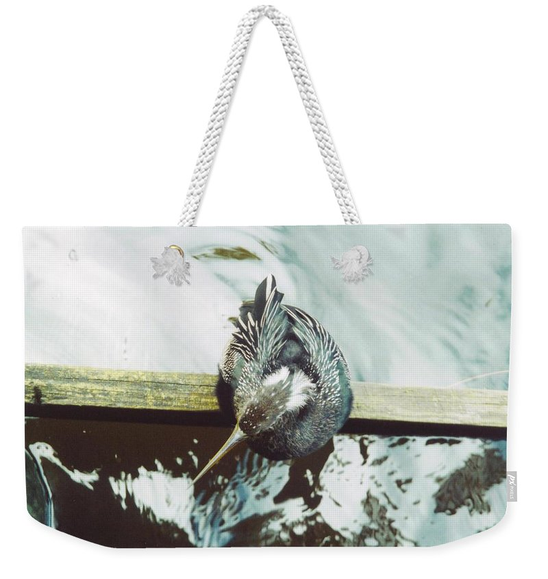 Lakes Park In Ft.myers Weekender Tote Bag featuring the photograph Anhinga Or Snakebird by Robert Floyd