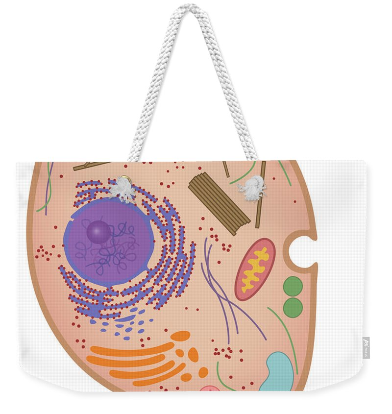Science Weekender Tote Bag featuring the photograph Animal Cell, Illustration by Gwen Shockey