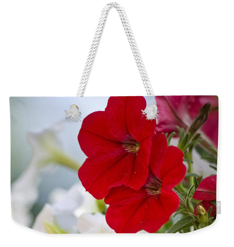 Petunia Weekender Tote Bag featuring the photograph Antique Petunia Flowers by Christina Rollo