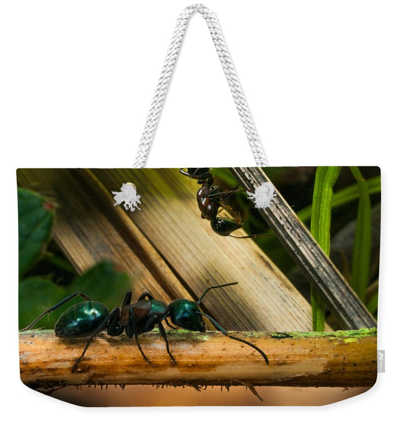 Ant Weekender Tote Bag featuring the photograph Ants Adventure 2 by Bob Orsillo