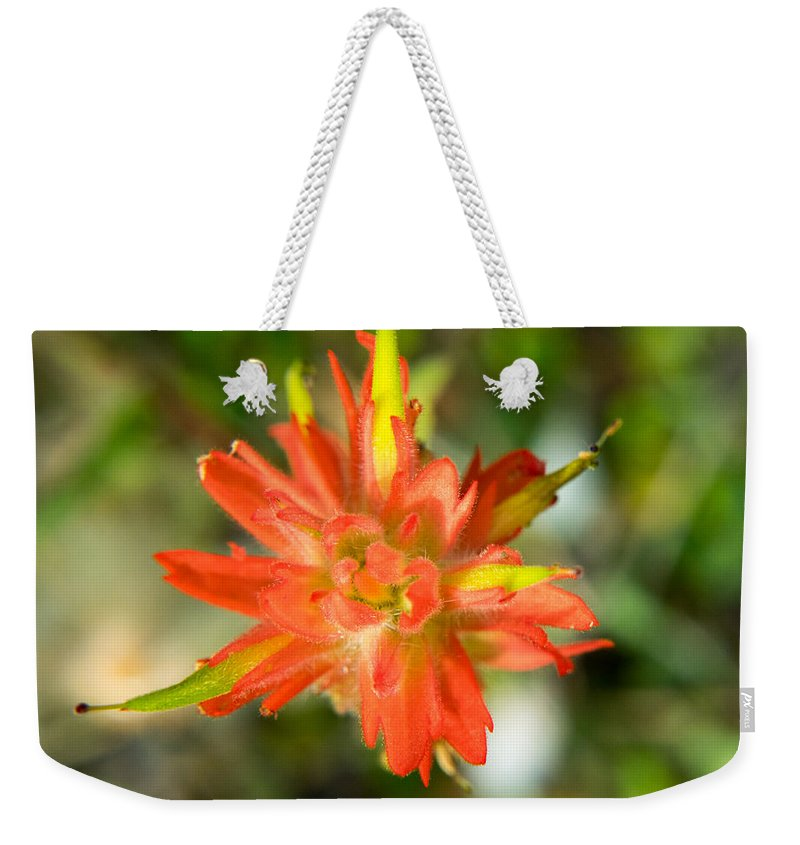 Alberta Weekender Tote Bag featuring the photograph Apex Of Indian Paintbrush by Douglas Barnett