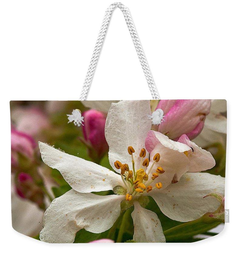 Apple Blooms Photograph Weekender Tote Bag featuring the photograph Apple Blooms by Mae Wertz
