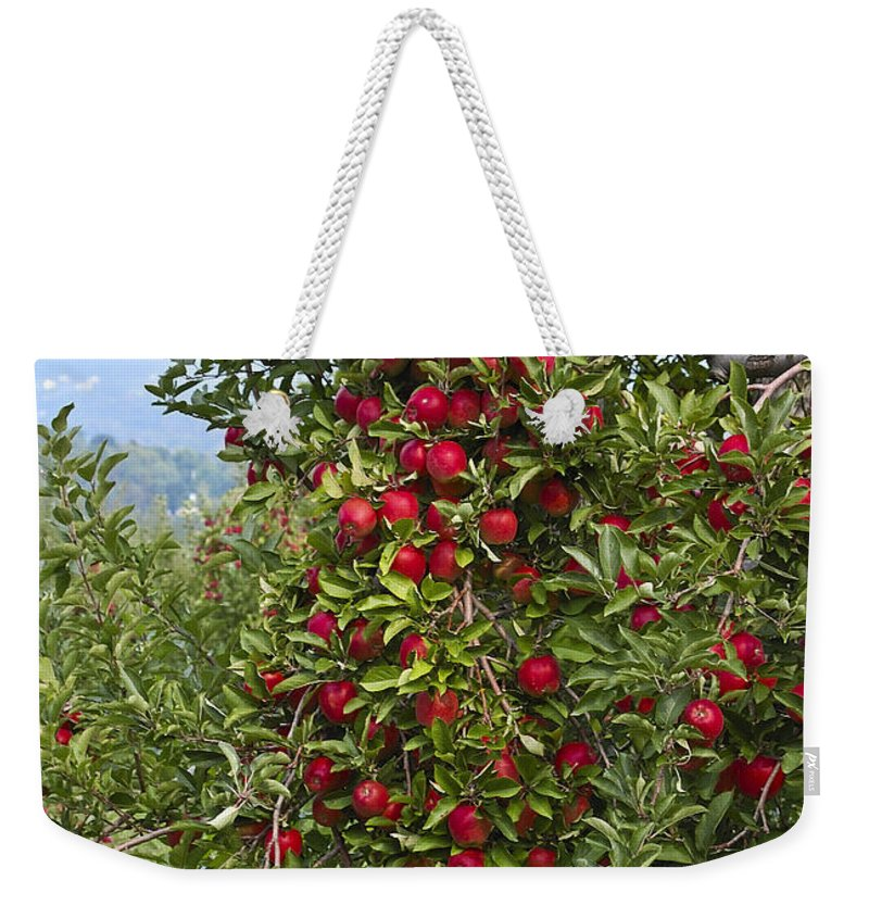 Apple Weekender Tote Bag featuring the photograph Apple Tree by Anthony Sacco