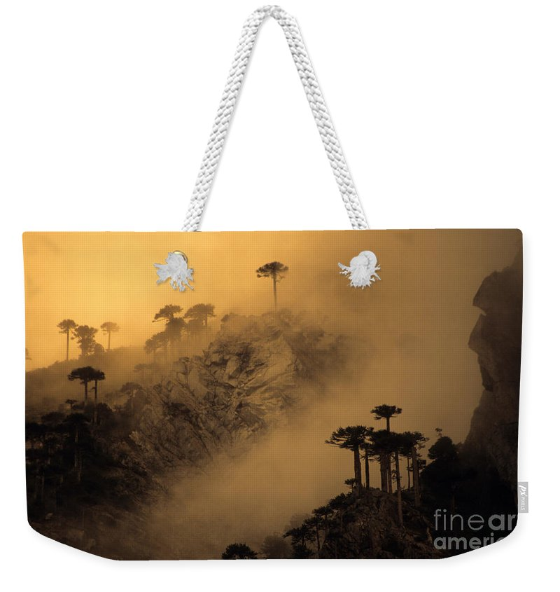 Chile Weekender Tote Bag featuring the photograph Araucaria Dawn Chile by James Brunker
