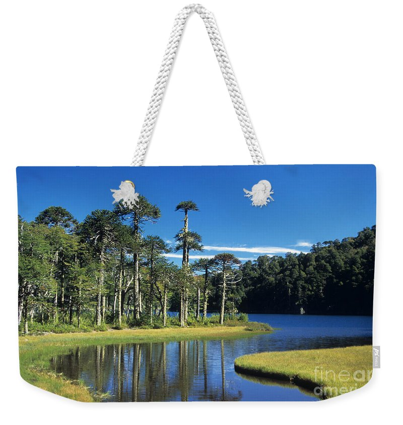 Chile Weekender Tote Bag featuring the photograph Araucaria Forest Chile by James Brunker