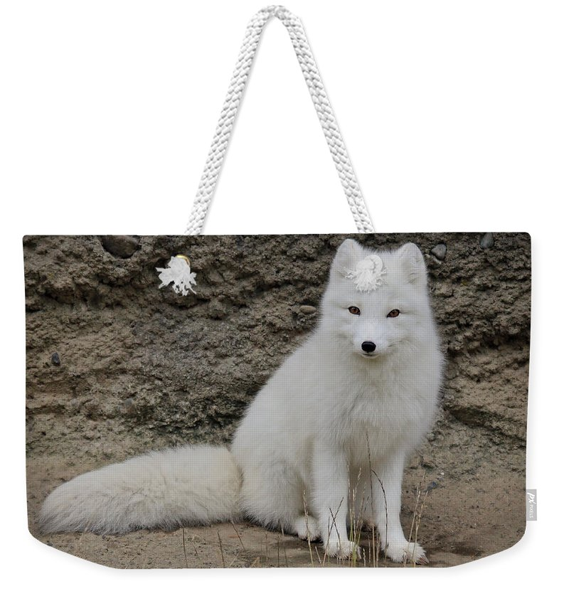 White Fox Weekender Tote Bag featuring the photograph Arctic Fox by Athena Mckinzie