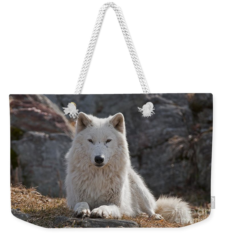 Arctic Wolf Greeting Cards Weekender Tote Bag featuring the photograph Arctic Wolf Pictures 518 by World Wildlife Photography
