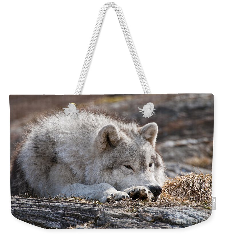 Arctic Wolf Greeting Cards Weekender Tote Bag featuring the photograph Arctic Wolf Pictures 526 by World Wildlife Photography