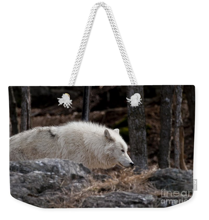 Arctic Wolf Greeting Cards Weekender Tote Bag featuring the photograph Arctic Wolf Pictures 541 by World Wildlife Photography