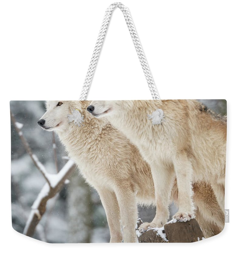 Snow Weekender Tote Bag featuring the photograph Arctic Wolves Pack In Wildlife, Winter by 4fr