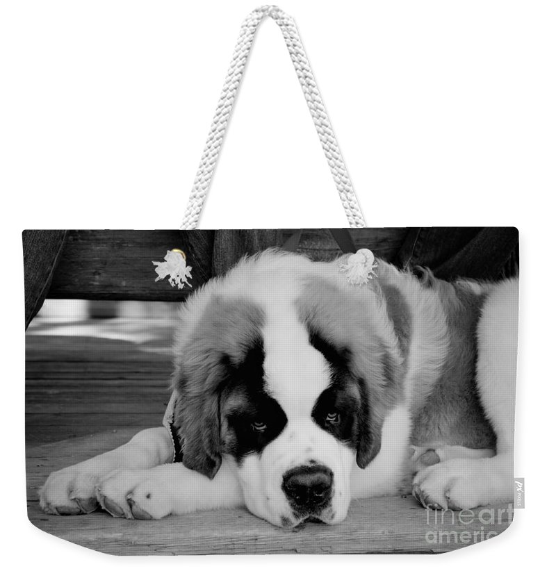 5 Star Weekender Tote Bag featuring the photograph Are We Done Yet by Alanna DPhoto