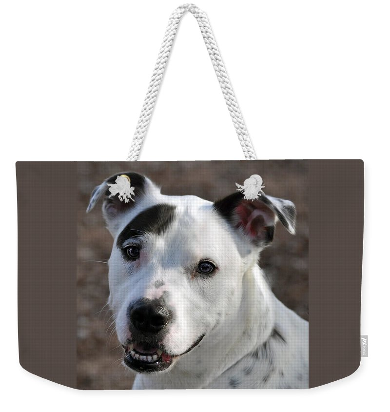 Portrait Weekender Tote Bag featuring the photograph Are You Looking At Me? by Savannah Gibbs