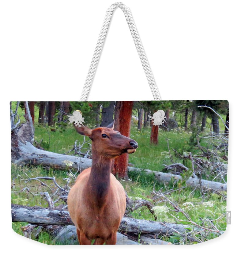 Mule Deer Weekender Tote Bag featuring the photograph Are You Talking To Me by Ausra Huntington nee Paulauskaite