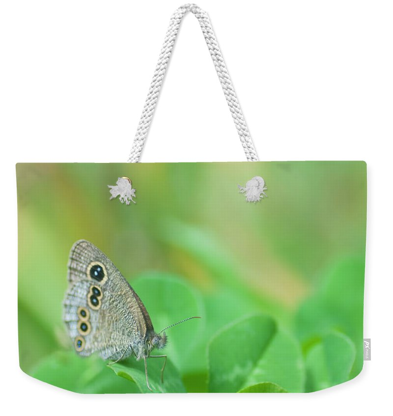 Insect Weekender Tote Bag featuring the photograph Argus Rings Butterfly by Polotan