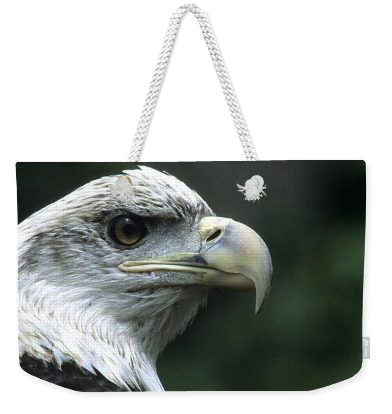 Eagle Weekender Tote Bag featuring the photograph Aristocratic Bald Eagle by Larry Allan