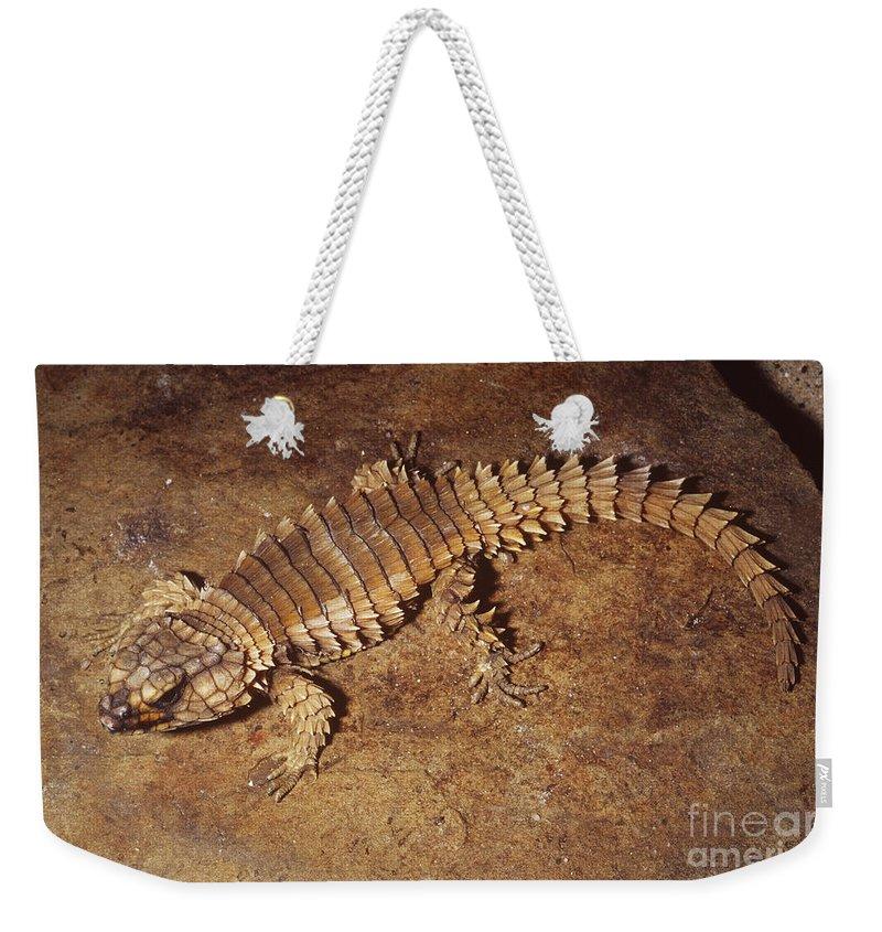 Armadillo Lizard Weekender Tote Bag