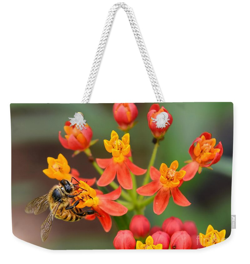 Scarlet Milkweed Weekender Tote Bag featuring the photograph Asclepias Curassavica And Bee by Olga Hamilton