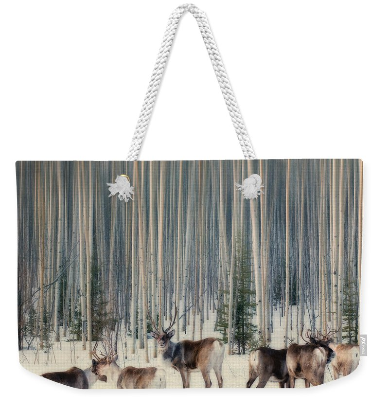 Woodland Caribou Weekender Tote Bag featuring the photograph Caribou And Trees by Priska Wettstein
