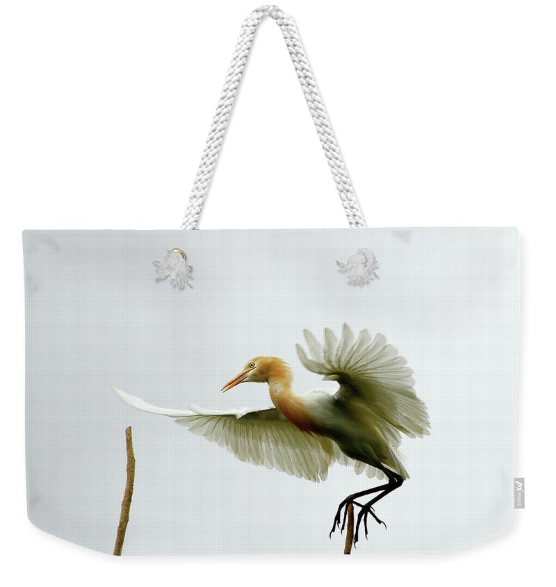 Travel Weekender Tote Bag featuring the photograph Asia by Dariel & Catherine Quiogue