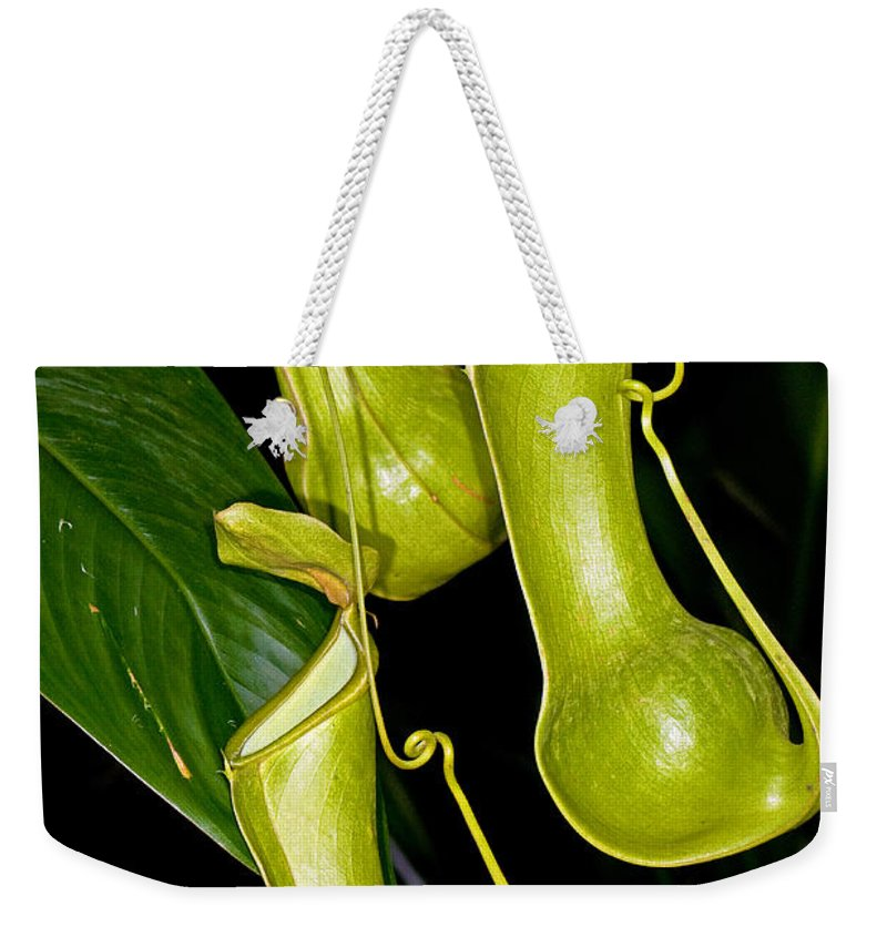 Nature Weekender Tote Bag featuring the photograph Asian Pitcher Plant by Millard H. Sharp