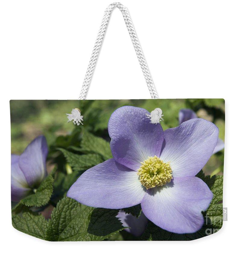 Spring Flowers Weekender Tote Bag featuring the photograph Asian Woods 1513 by Terri Winkler
