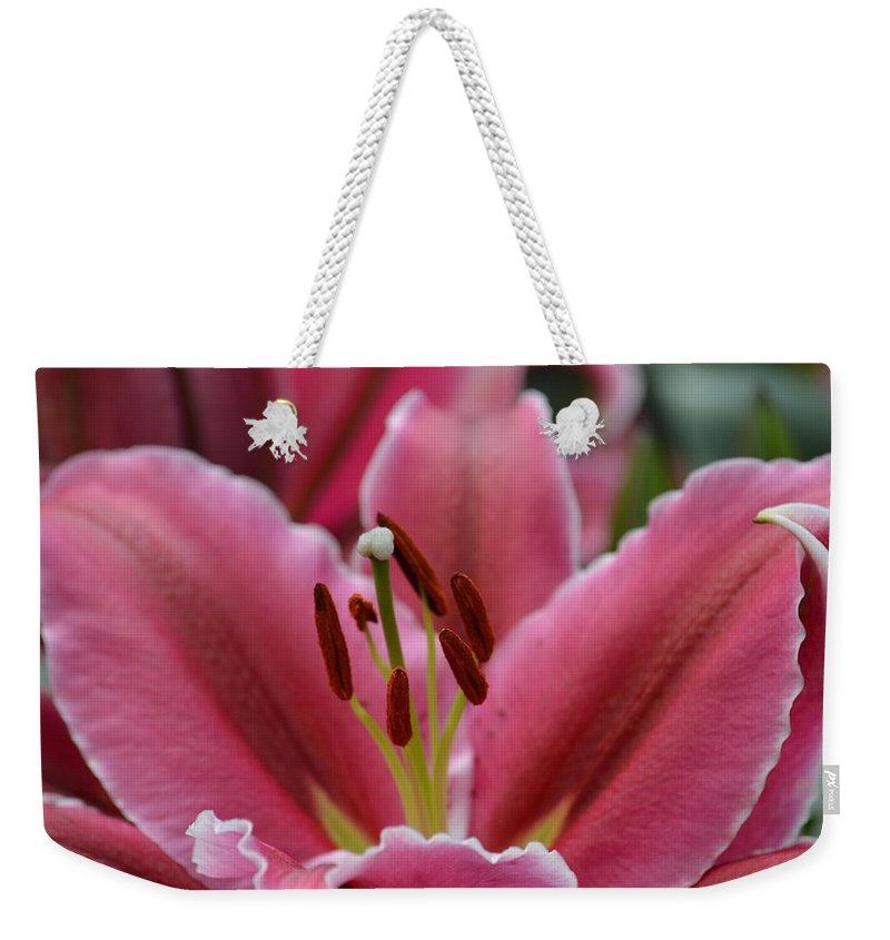 Asiatic Pink Weekender Tote Bag featuring the photograph Asiatic Pink by Maria Urso