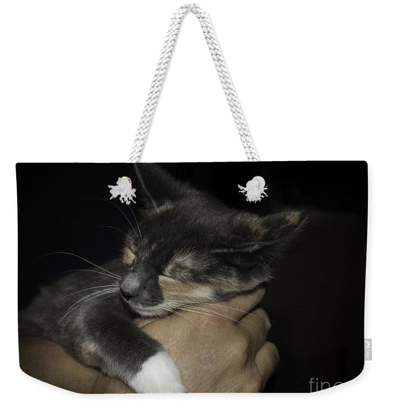 Kitten Weekender Tote Bag featuring the photograph Asleep by Susan Warren