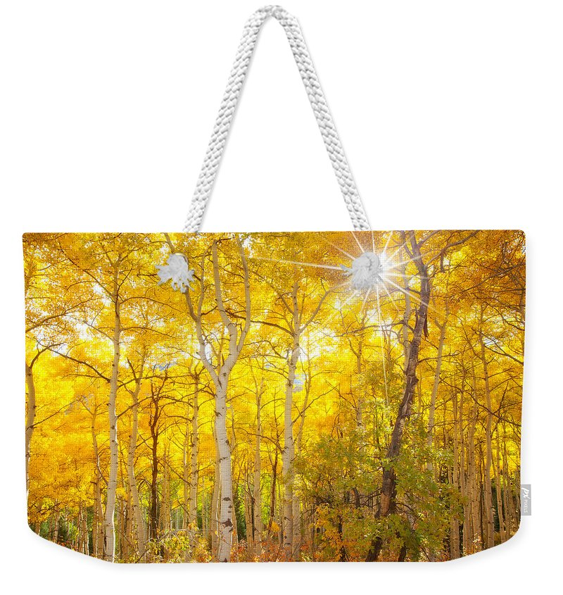 Aspens Weekender Tote Bag featuring the photograph Aspen Morning by Darren White