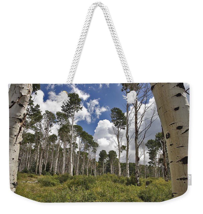 3scape Weekender Tote Bag featuring the photograph Aspen Grove by Adam Romanowicz