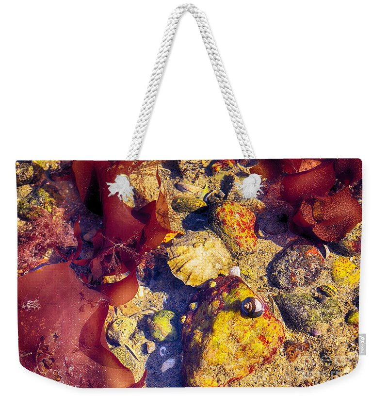 Tidal Weekender Tote Bag featuring the photograph At The Pool by Joe Geraci