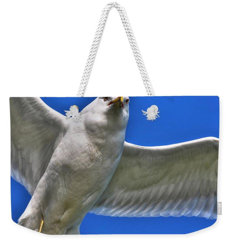 Seagull Weekender Tote Bag featuring the photograph At Your Disposal The Waiting Gull by Michael Frank Jr