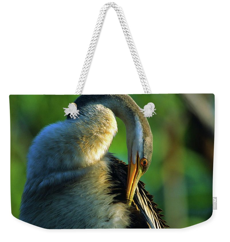 Darter Weekender Tote Bag featuring the photograph Australian Darter Preening by Bruce J Robinson