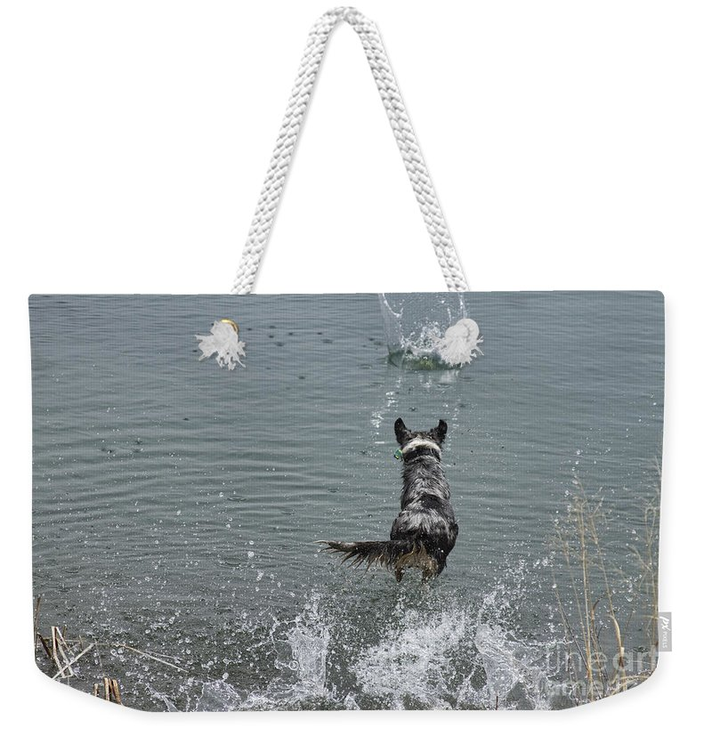 Australian Shepherd Weekender Tote Bag featuring the photograph Australian Shepherd Fun At The Lake Chasing The Ball by James BO Insogna