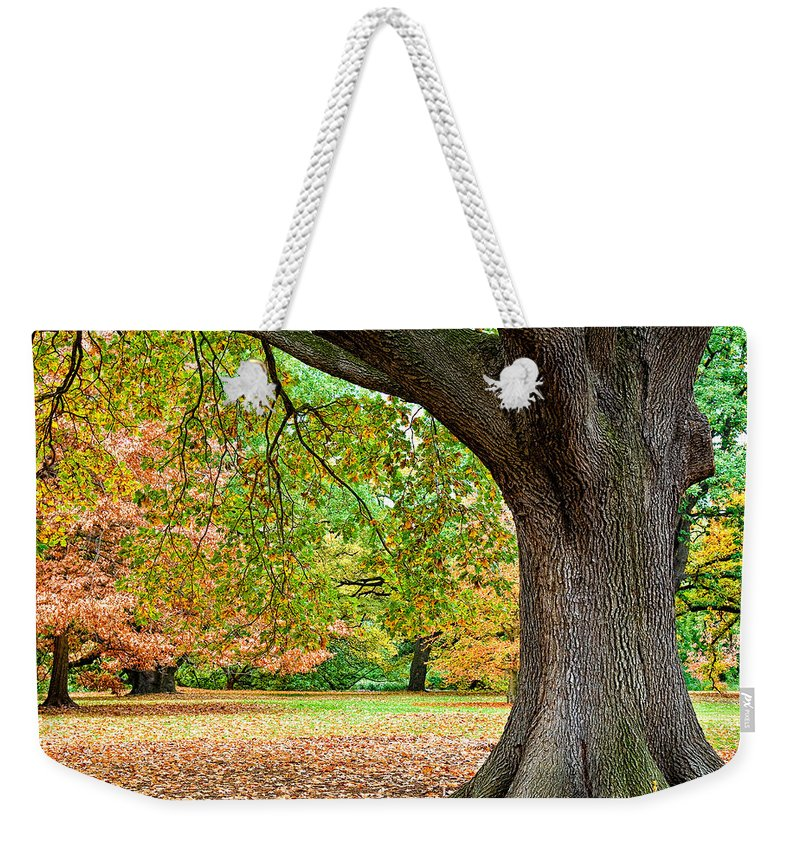 Autumn Weekender Tote Bag featuring the photograph Autumn by Dave Bowman