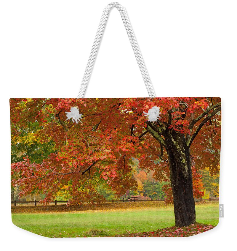 Red Tree Weekender Tote Bag featuring the photograph Autumn In The Park by Karol Livote