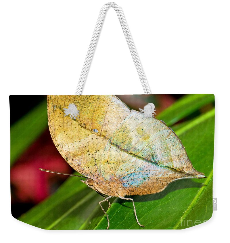 Nature Weekender Tote Bag featuring the photograph Autumn Leaf Butterfly by Millard H. Sharp