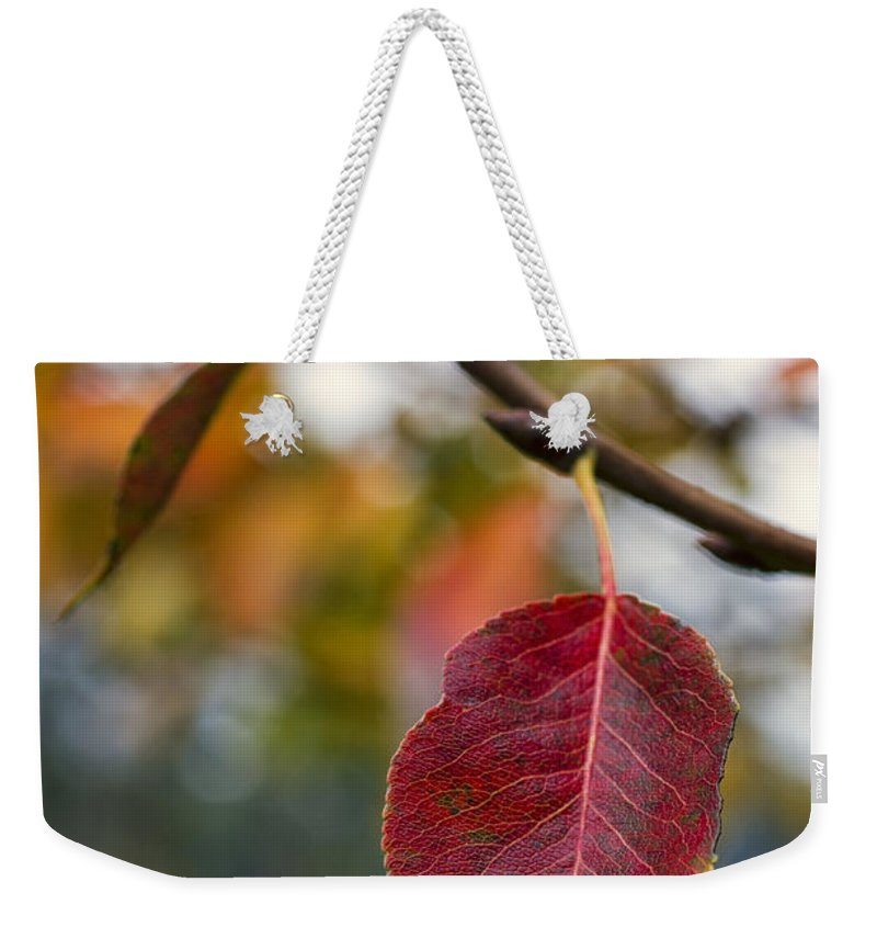 Fall Weekender Tote Bag featuring the photograph Autumn Leaf by Paulo Goncalves