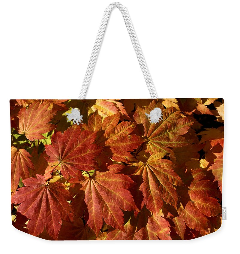Autumn Weekender Tote Bag featuring the photograph Autumn Leaves 00 by Ron Harpham