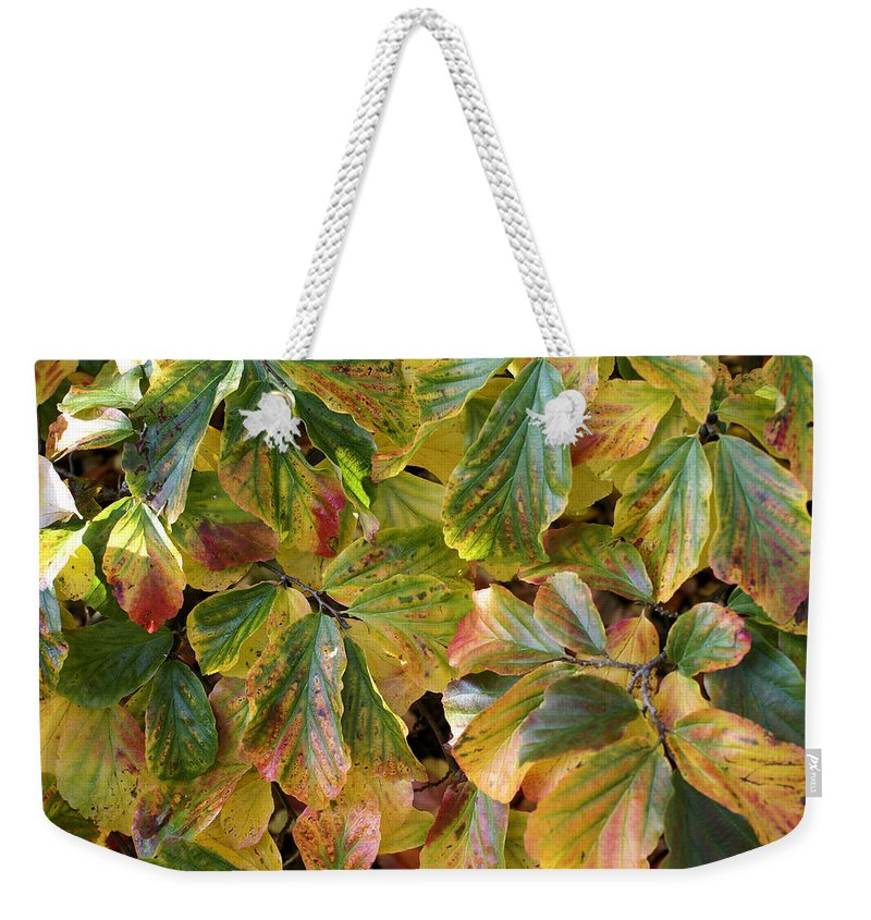 Autumn Weekender Tote Bag featuring the photograph Autumn Leaves 79 by Ron Harpham