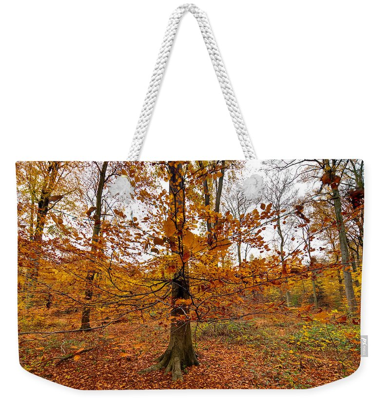 Autumn Weekender Tote Bag featuring the photograph Autumn Leaves Common Wood by Gary Eason