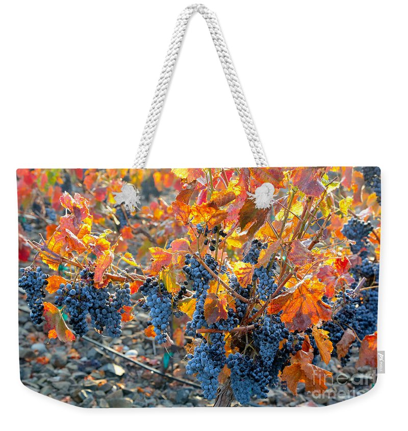 Grapes Weekender Tote Bag featuring the photograph Autumn Vineyard Sunlight by Carol Groenen