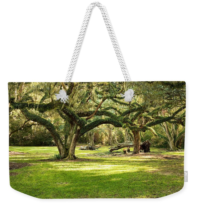 Oak Trees Weekender Tote Bag featuring the photograph Avery Island Oaks by Scott Pellegrin