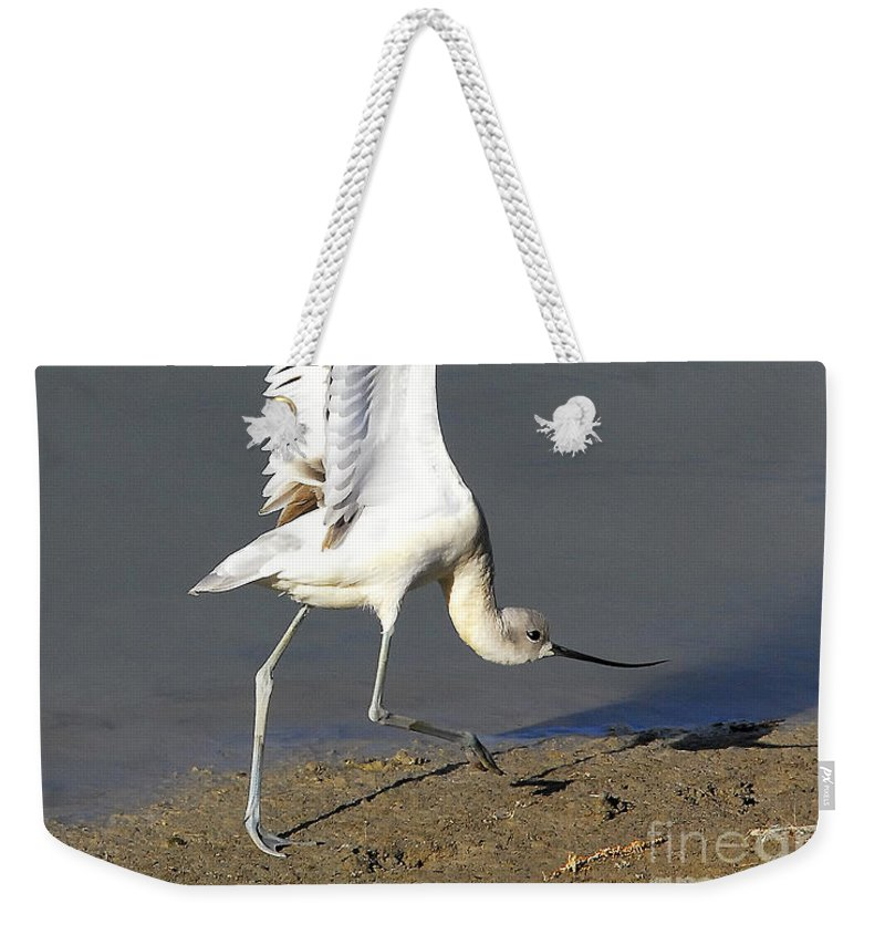 American Avocet Weekender Tote Bag featuring the photograph Avocet Dancer by Timothy Flanigan
