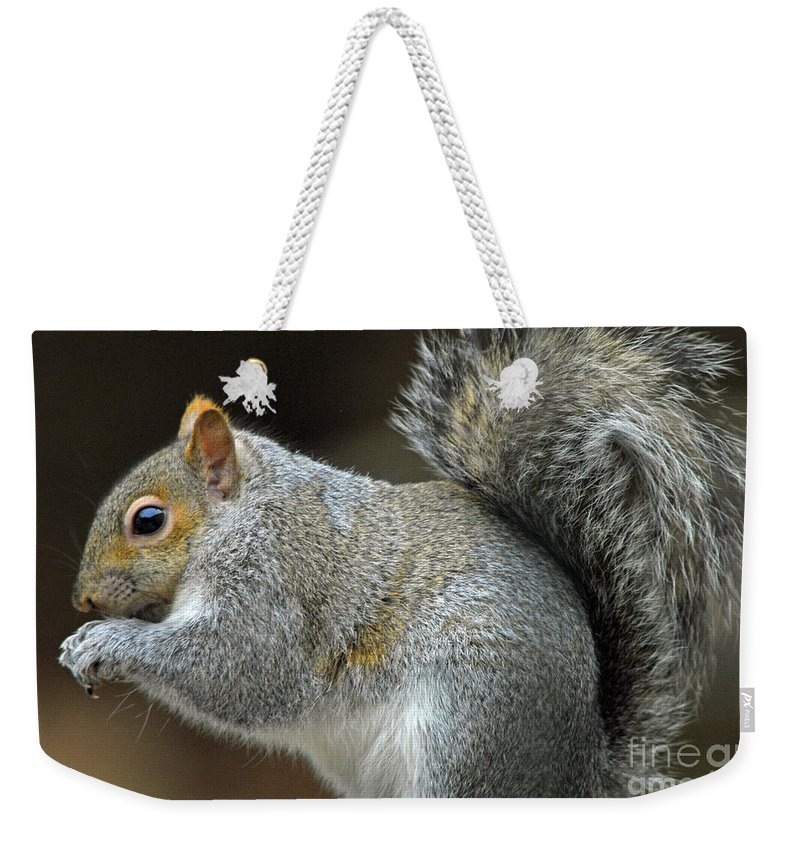 Squirrels Weekender Tote Bag featuring the photograph Aw Nuts by Cindy Manero